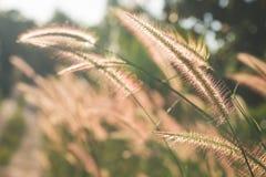 Gräs i natur Royaltyfria Bilder