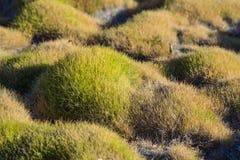 Gräs i orientaliska Zen Garden Arkivfoton