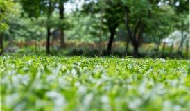 Gräs i parken Arkivfoto