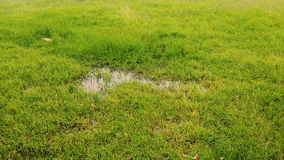 Gräs i regnet Arkivbilder
