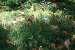Gräs i skogen Fotografering för Bildbyråer