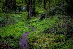 Gräs i skogen arkivfoto