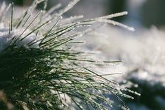 Gräs i snowen royaltyfri bild