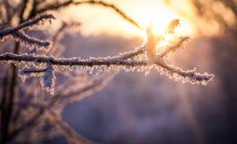 Gräs i snowen royaltyfria bilder
