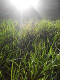 Gräs i solsken Royaltyfri Fotografi
