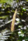 Gräs i sunen Arkivfoton