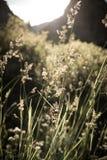 Gräs i sunen Arkivbild