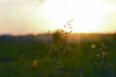 Gräs i sunen Royaltyfri Bild