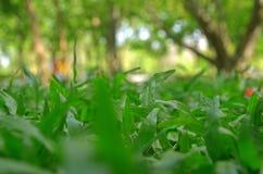 Gräs i trädgård Arkivfoton