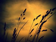 Gräs i varm ogenomskinlighet arkivfoto