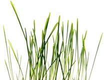 gräs isolerade fotoet Arkivbild