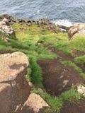 Gräs- klippa över havet Arkivbilder