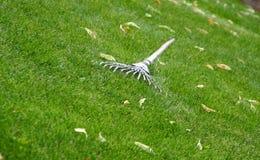 gräs krattar royaltyfri fotografi