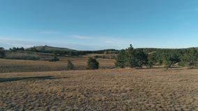 Gräs- kullar med barrträd skjutit En solig ren dag lager videofilmer