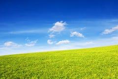 Gräs- kulle i strålarna av solen under en blå himmel royaltyfri fotografi