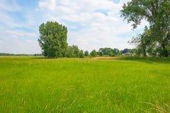 Gräs längs ett träd fodrade ängen i sommar royaltyfria foton