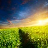 gräs långt arkivfoton