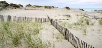 Gräs- landskap för sanddyn på soluppgång royaltyfria foton