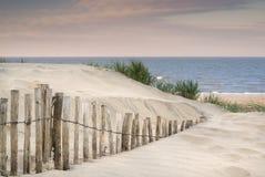 Gräs- landskap för sanddyn på soluppgång Arkivbilder