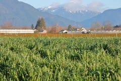 Gräs- landskap i vinterjordbruksmark arkivfoto