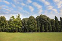 gräs- lawn för tät skog fotografering för bildbyråer