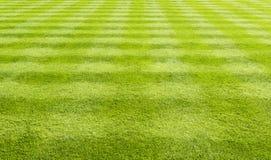 Gräs lawnbakgrund Royaltyfri Bild