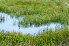 gräs- marsklan Arkivbild