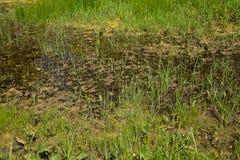 Gräs- marsklan med stående vatten Royaltyfri Fotografi