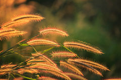 Gräs med belysning Arkivbilder