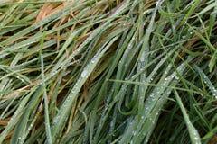 Gräs med bevattnar tappar Royaltyfri Fotografi