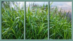 Gräs med bevattnar tappar royaltyfria bilder