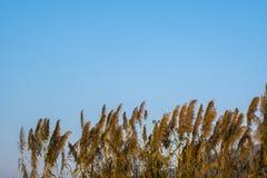 Gräs med blå bakgrund royaltyfria foton