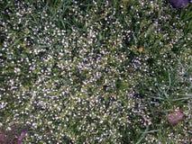 Gräs med blommor royaltyfria foton