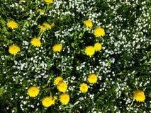 Gräs med blommor royaltyfri foto