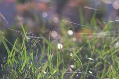 Gräs med bokeh Royaltyfria Foton
