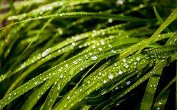 Gräs med dagg Arkivfoton