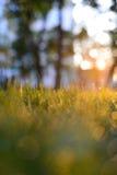 Gräs med dagg i morgonen Arkivbild