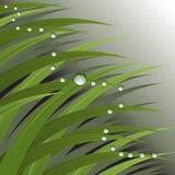 Gräs med dagg tappar Royaltyfri Foto