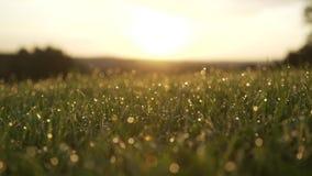 Gräs med dagg tappar Suddig gräsbakgrund med vatten tappar closeupen Natur Grönt vårmiljöbegrepp långsam rörelse Su stock video