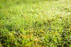 Gräs med dagget Royaltyfri Foto