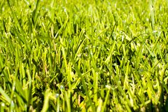 Gräs med daw Arkivfoton