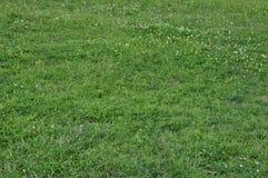 Gräs med defocused blommabakgrund fotografering för bildbyråer
