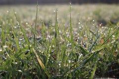 Gräs med en droppe av dagg Royaltyfri Foto
