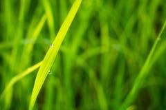 Gräs med fångad dagg Royaltyfri Fotografi