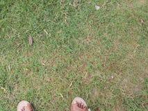 Gräs med fot Arkivfoto