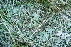 Gräs med frost Royaltyfri Foto