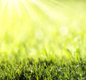 Gräs med grön bokeh Arkivbilder