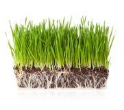 Gräs med jord Fotografering för Bildbyråer