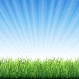 Gräs med krypande röttervektorbakgrund Arkivfoto