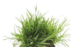 Gräs med rotar Royaltyfri Bild